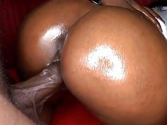 Wild cock sucking for spruce white stud